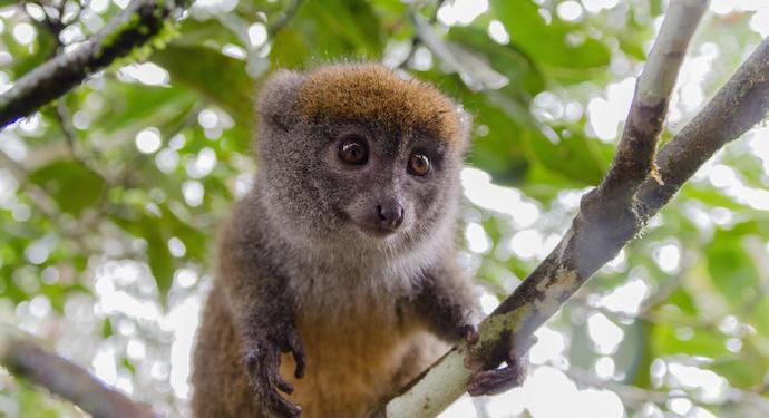 Lemur_shutterstock_228578944