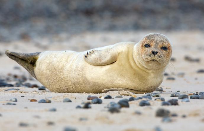 seal_shutterstock_124216504